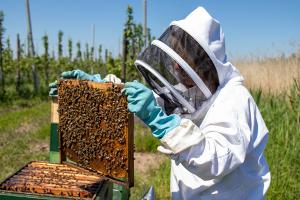 Demeter-Bienen